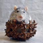 アトピーと自律神経の乱れ 緊張の蓄積現象との関係