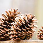 カラダの硬さと整体の範疇の不調との関係・ストレッチ信仰の弊害